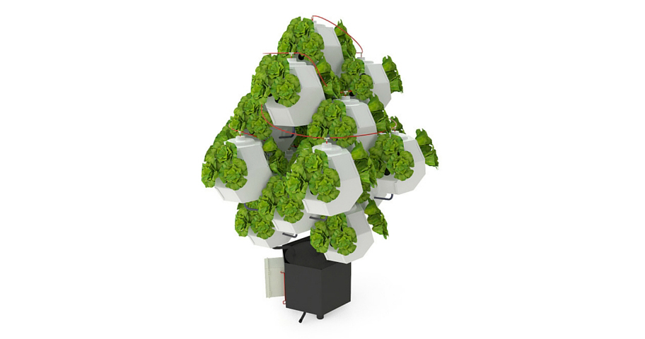 Using Biomimicry to Create a Modular Urban Farming System