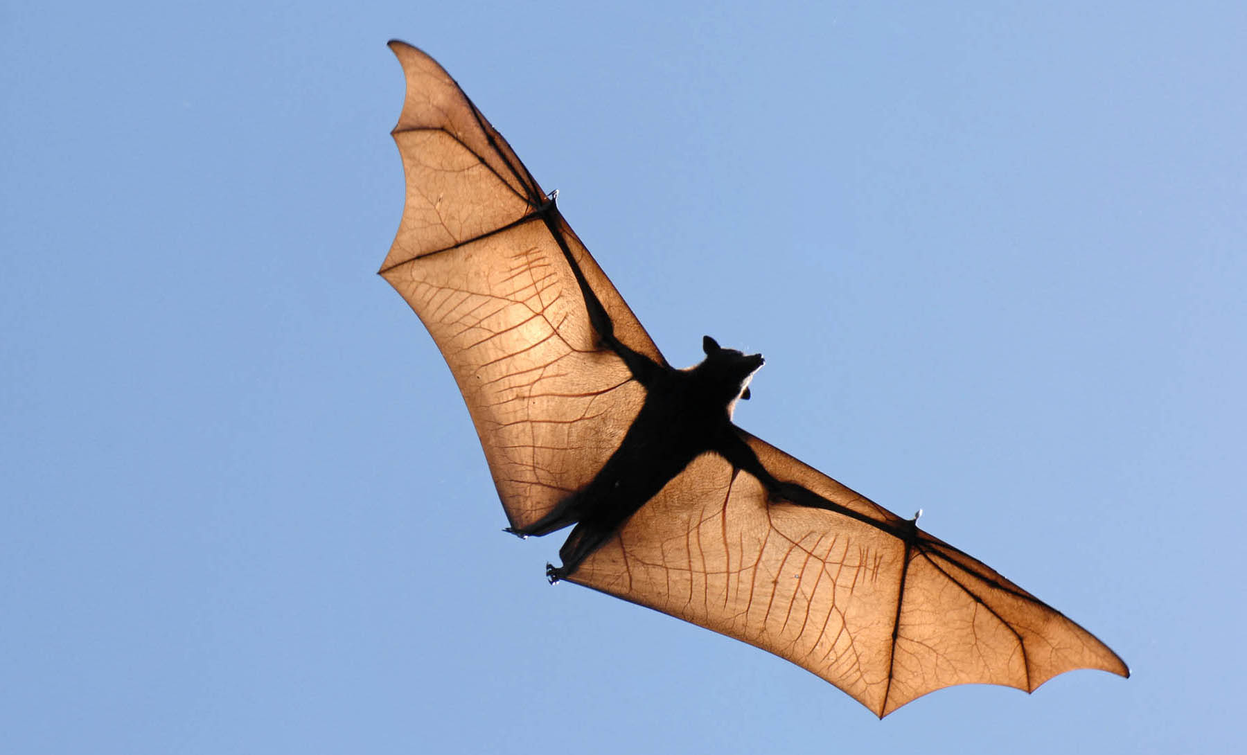 Creating Bio-inspired Wings for High-Performance Drones