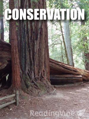 Conservation reading set