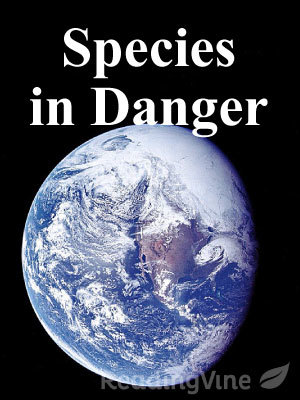 Species in danger reading set