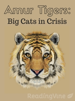Amur tigers big cats in crises r