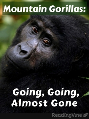 Mountain gorillas going going almost gone