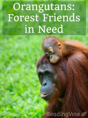 Orangutans forest friends in need