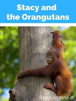 Stacy and the orangutans