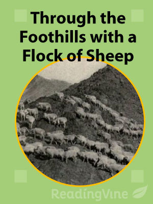 Through the foothills with a flock of sheep