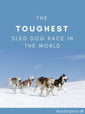 The toughest sled dog race in the world
