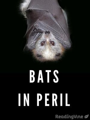 Bats in peril