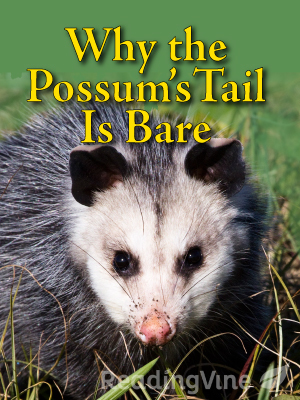 Why the possums tail is bare