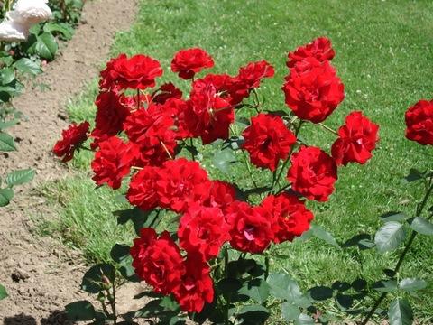2.Garden.jpg