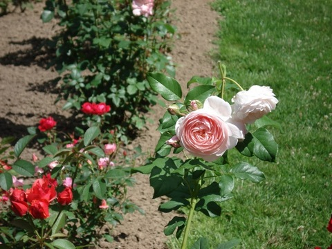 3.Garden.jpg
