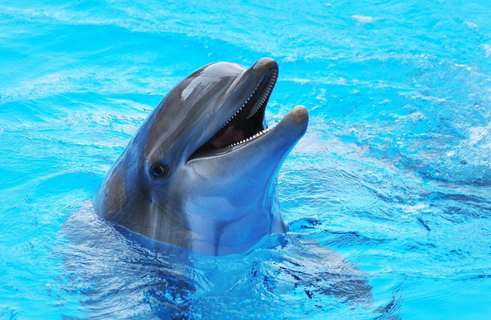dolphin swimming in pool