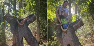Mom 'mortified' when her son gets stuck inside of hollow tree during first park trip after lockdown