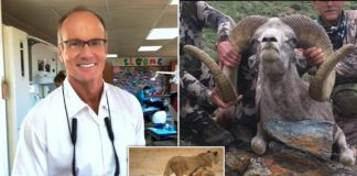 Dentist Walter Palmer, who killed Cecil the lion, is now back at killing endangered rams in Mongolia
