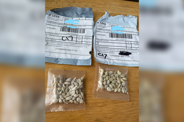 The mysterious seeds sent from China.WSDA