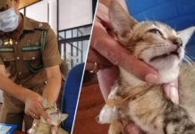 """Drug smuggler"" cat escapes Sri Lanka prison"