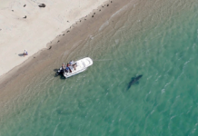 Cape Cod is closing beaches after shark sightings