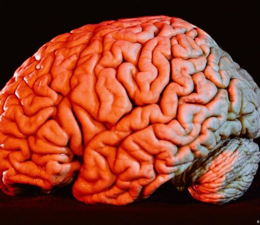What does COVID-19 do to the human brain?