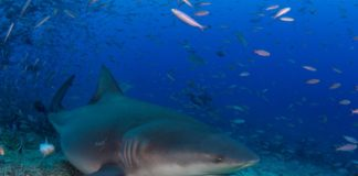 Snorkeler attacked by sharks in Florida Keys