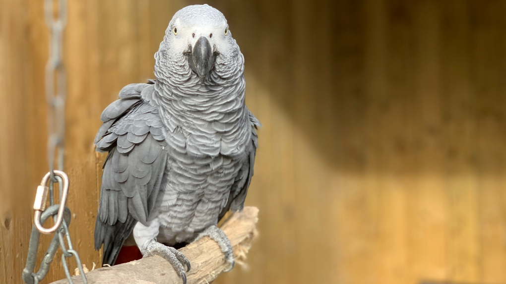 Lincolnshire Wildife Park parrots removed from public view after swearing at customers