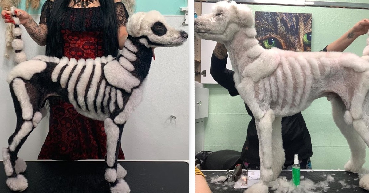 Woman trims poodle into skeleton dog for Halloween