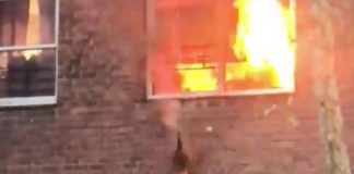 Cat jumps off Harlem apartment fire in breathtaking moment
