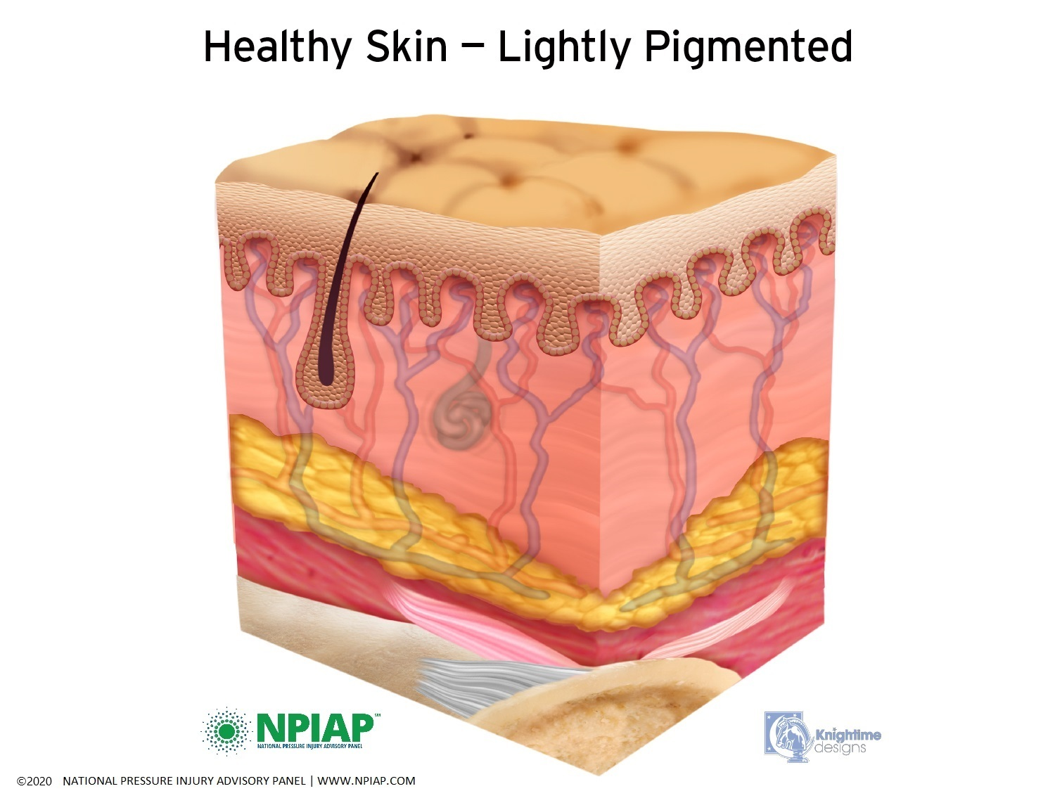 Healthy Skin- Lightly Pigmented