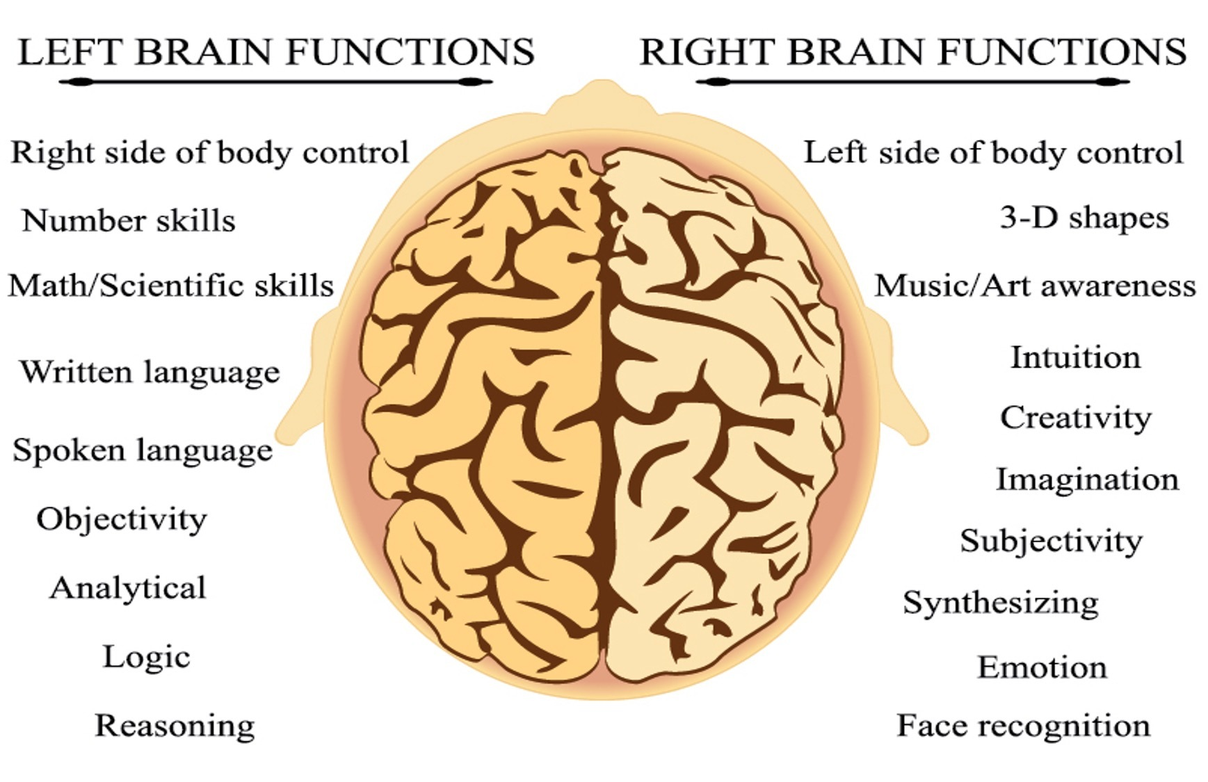 Graph of the brain