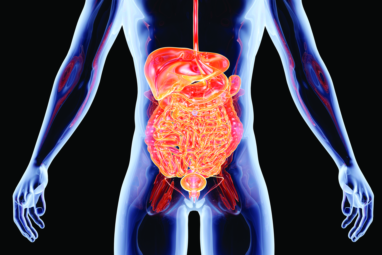 bowel diagram