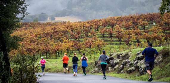 Wine Country Half Marathon and 10k