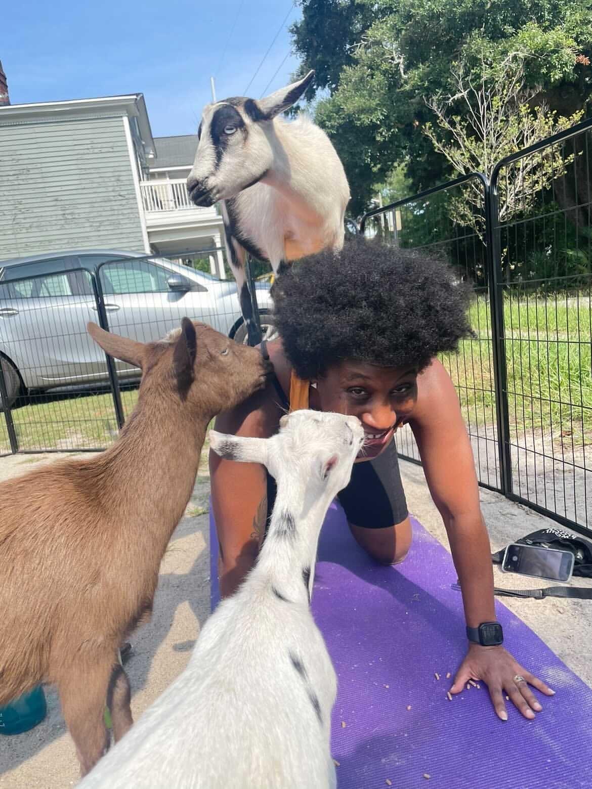 Felicia doing goat yoga