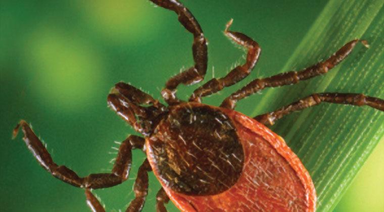 Lyme disease - Reeve Foundation