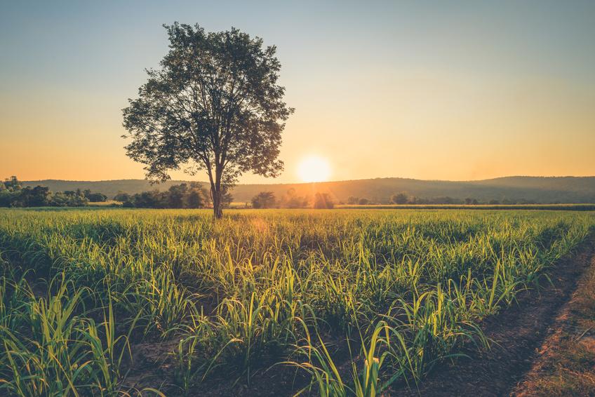 Agriculture / Farmland