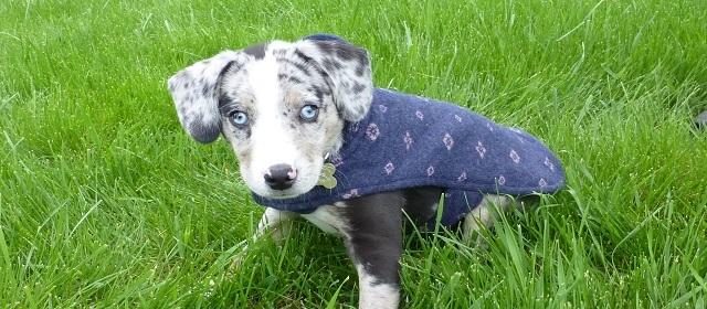 Dog_coat