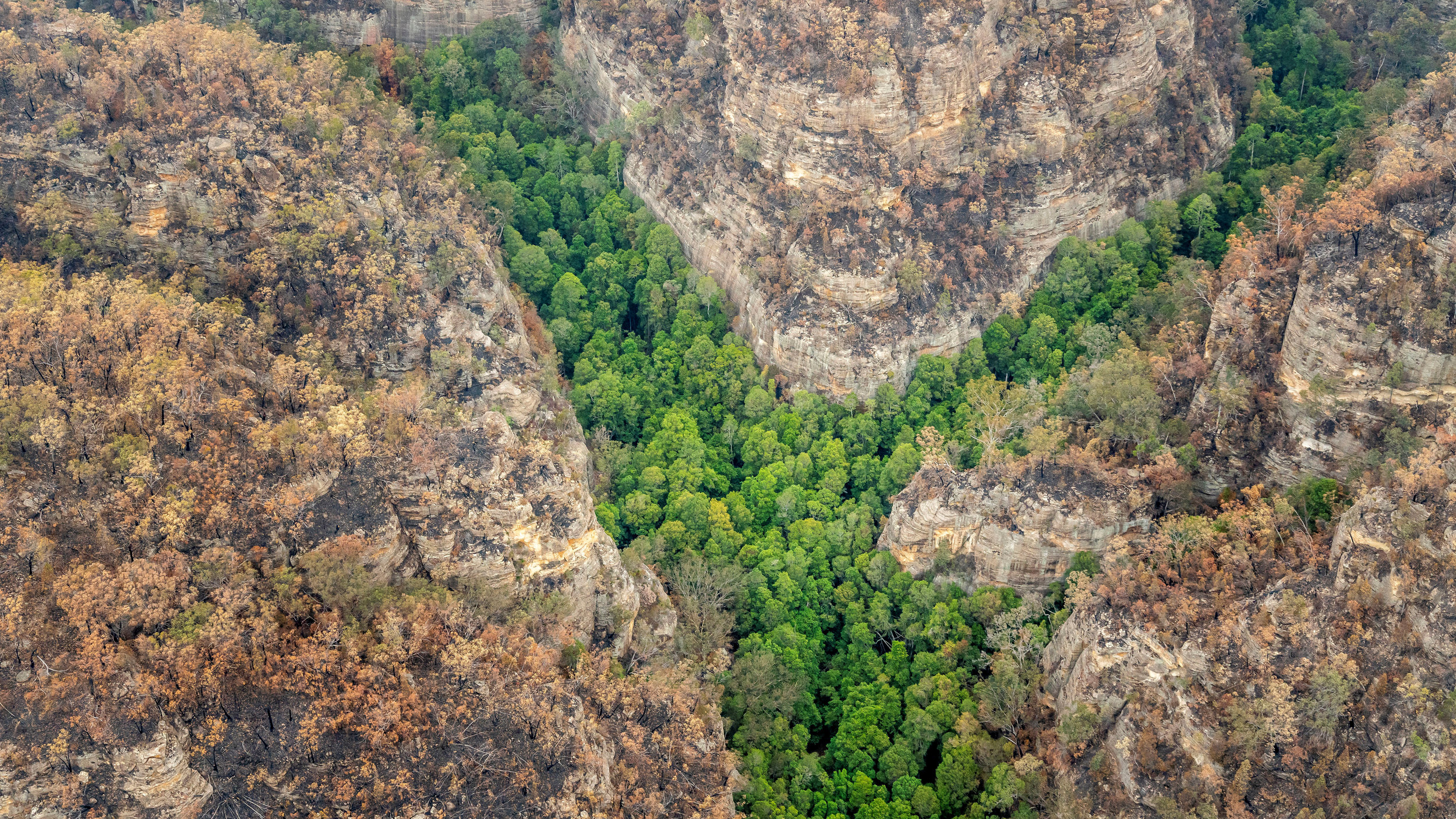 Aussie Firefighters Save World's Only Grove Of Prehistoric Wollemi Pines
