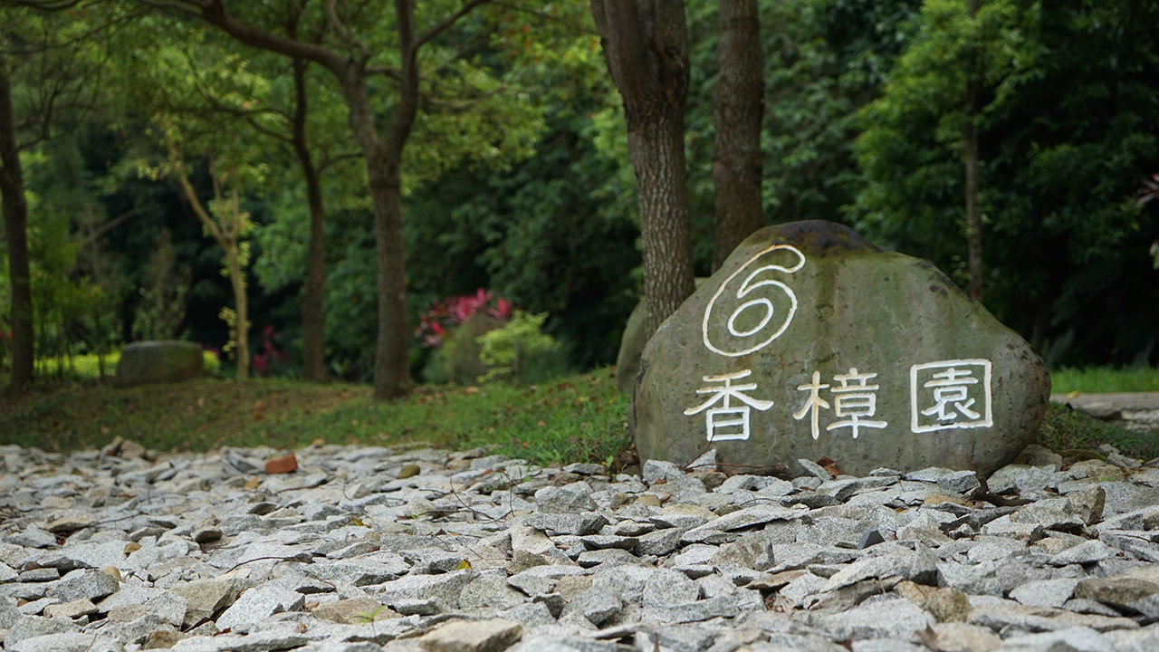 In Taipei, Families Bury Their Loved Ones Next to Trees