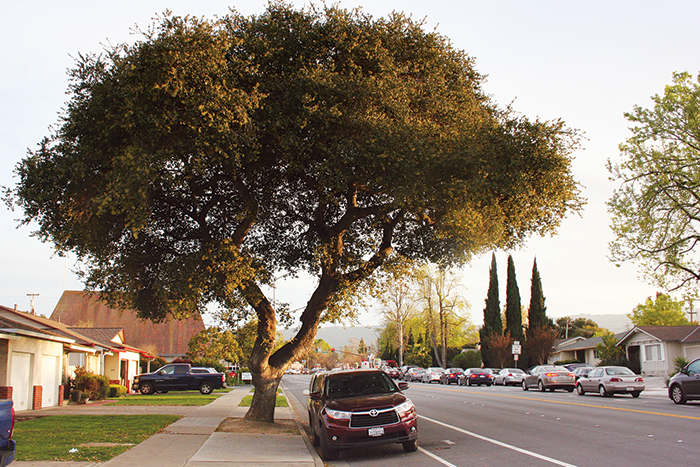 Money Trees: Cities Find New Ways to Value Urban Forests