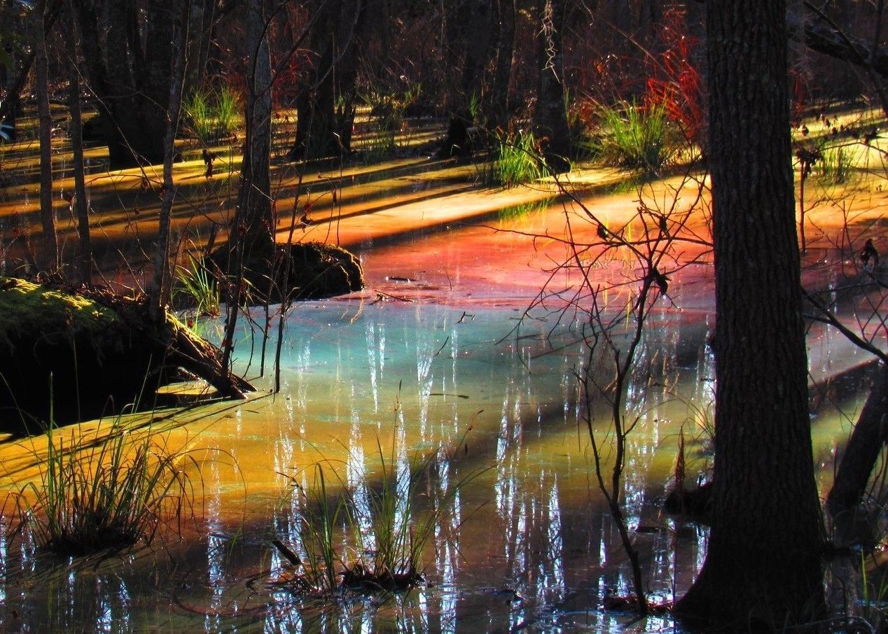 The South Carolina Forest That Looks Like Melted Ice Cream