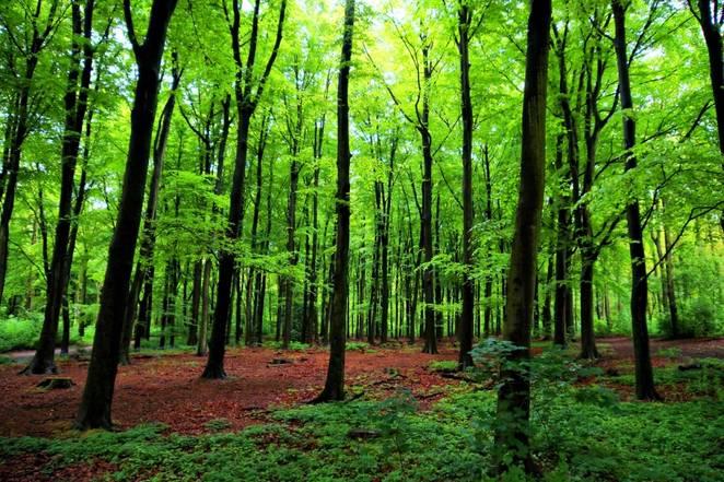 The World Beneath the Trees