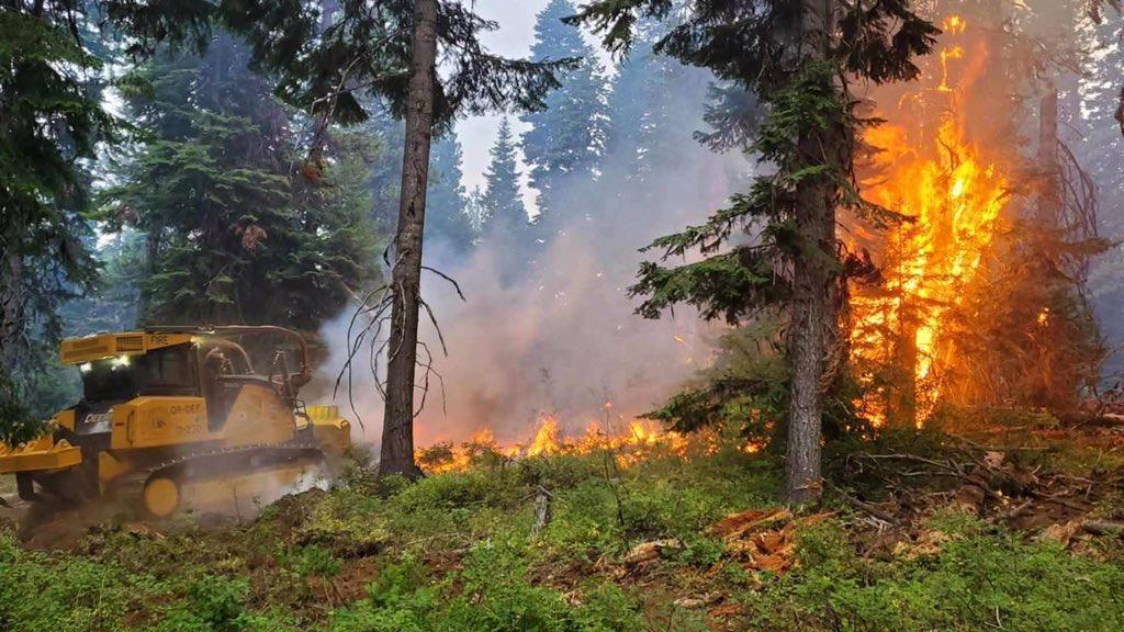 Fires Scorch a Way of Life that Still Grows from the Trees