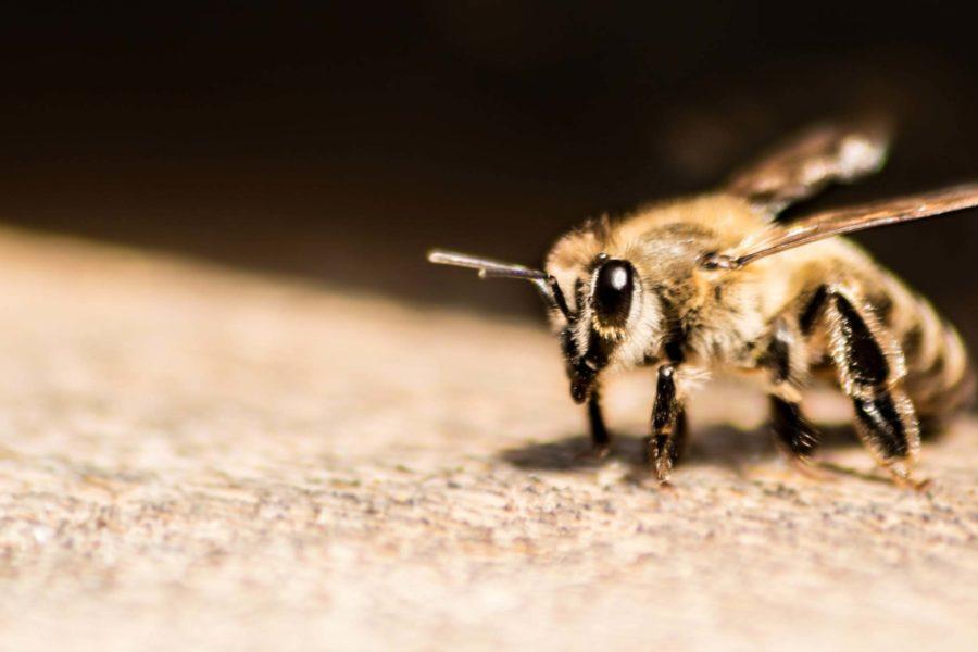01 16 Bee