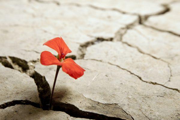 11 08 Concrete Flower