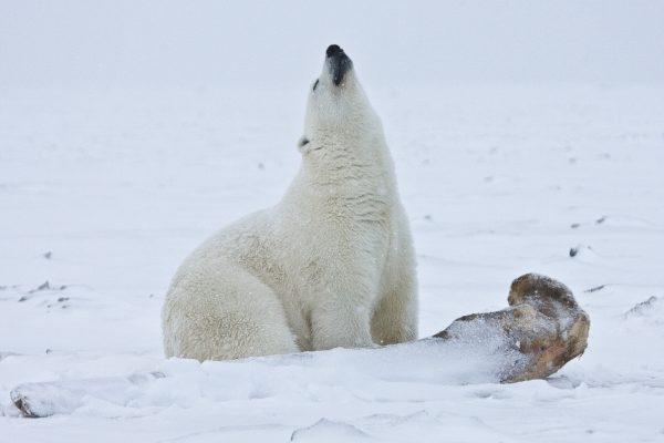 12 20 North Pole