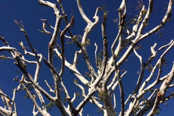Mimi Tree 2