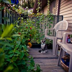 Balcony Garden with Cat