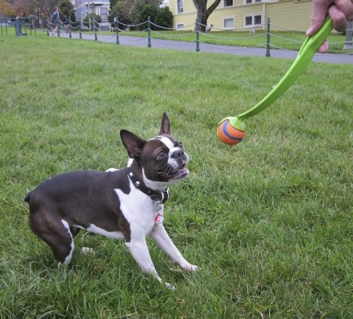 30 minutes of fetch will help keep your dog healthy and ensure they're calm and docile while you're away.