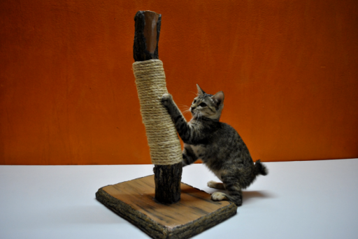 A scratching post will help your cat pursue their natural tendencies without destroying your furniture.
