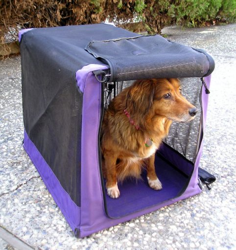 Crate training your dog will help build a sense of confidence and safety.