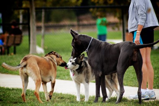 Even a pet-friendly apartment necessitates taking your pup to the park for socialization.