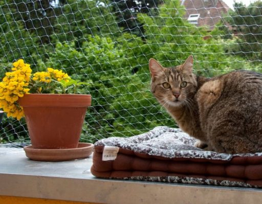 Enclosing your outdoor balcony space will protect your cat and provide a safe play space for your furry buddy.