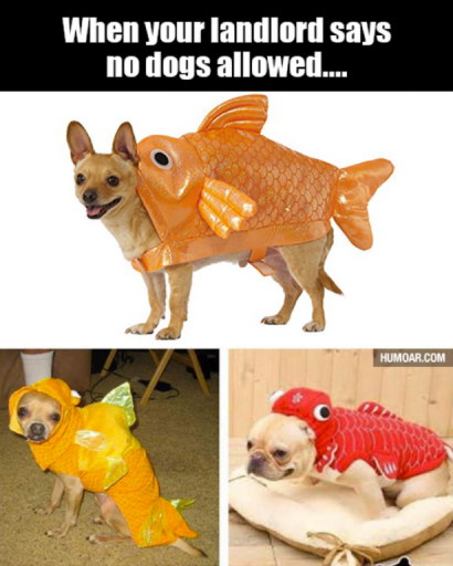 dog disguised as a fish